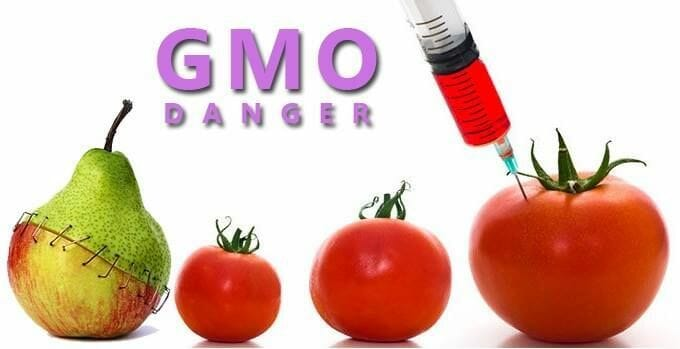 The Dangers Of Genetically Modified Food